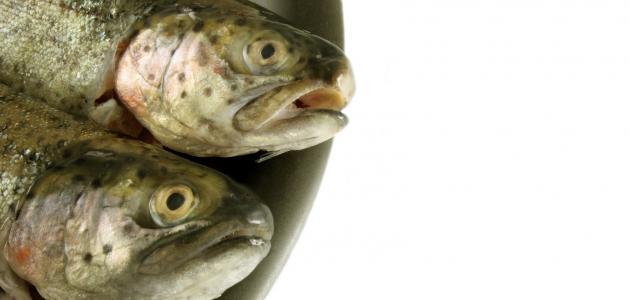 صور تفسير رؤيا السمك