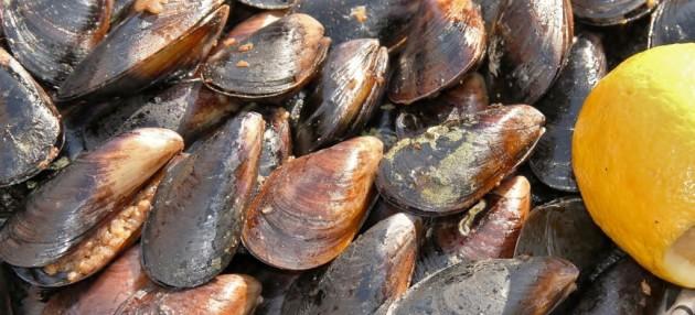صورة ما هو بلح البحر , فوائد لمن تكن تعرفيها عن طهي بلح البلح