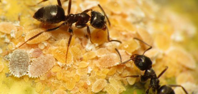 صور معنى رؤية النمل في المنام