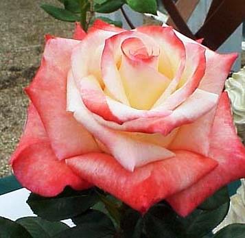 صورة صور جميع انواع الورد , خلفية لاجمل زهور متنوعة لمحبي النظر الي الورد