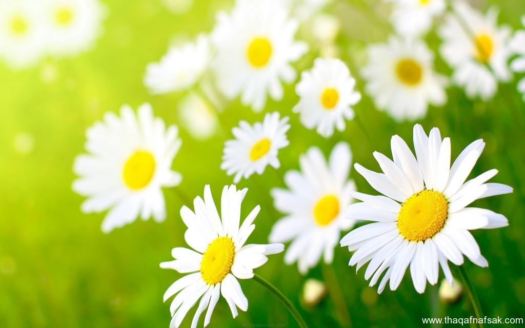 زهور ملونه ثقف نفسك4
