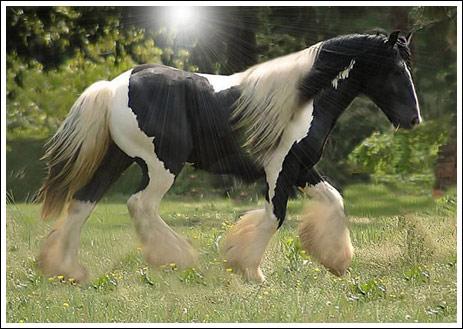 صورة انواع الاحصنة , اجمل حصان بشعر ناعم