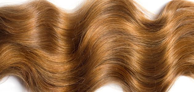 صورة خلطة لتطويل الشعر في يومين , حافظي على شعرك الجاف مع اقوى خلطة للتطويل