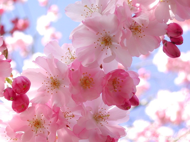 زهور ملونه ثقف نفسك1
