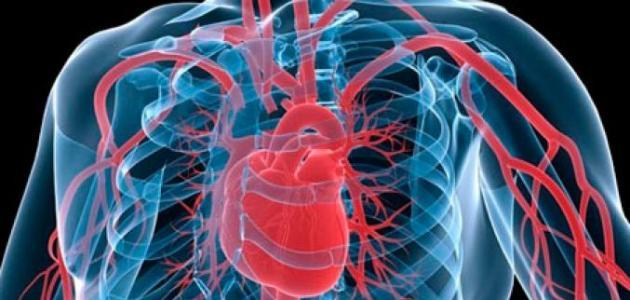 كيف يعمل القلب