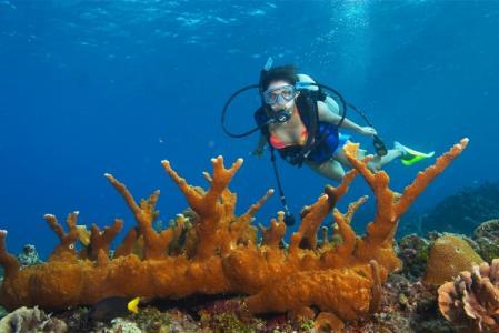 صورة رياضة الغوص تحت الماء , البحر والغطس في اعماقه هوايات الكثيرون