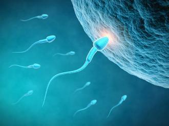 صورة اعشاب تساعد على الحمل بولد , كيف تحملين بذكر في فترة حملك الاول