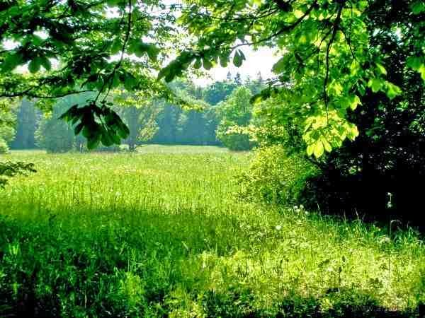 صور تفسير حلم رؤية الارض الخضراء