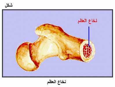 صورة فوائد نخاع العظم , فوائد رهيبة للبشرة والشعر بستخدام النخاع 9d393fcda48e7ca88edf5d9964a2ffee