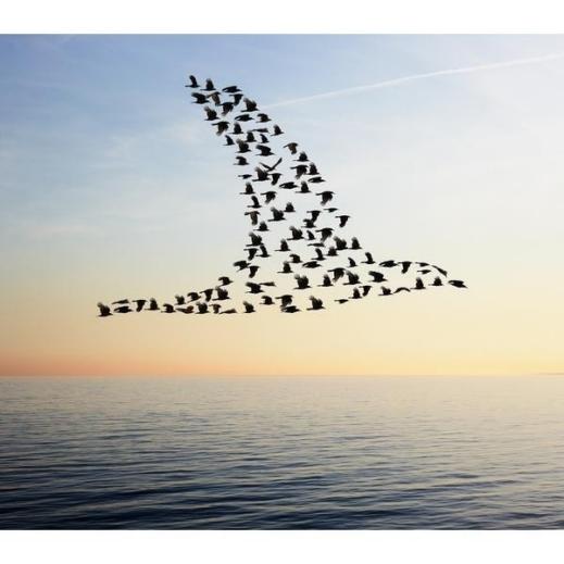 صورة صور عن هجرة الطيور , خلفيات لاجمل هجرة طيور بالسماء