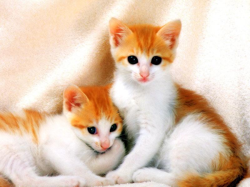 صورة تفسير رؤية القطط في الحلم