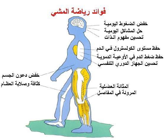 صورة فوائد الرياضة للجسم , المشي نصف ساعة يوميا يفعل المعجزات