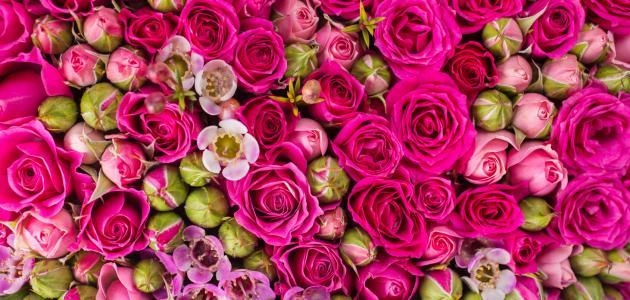 صورة تفسير اكل الورد في الحلم