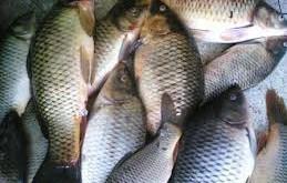 بالصور تفسير حلم صيد السمك سمك 259x165