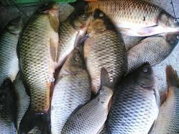 بالصور تفسير حلم صيد السمك سمك