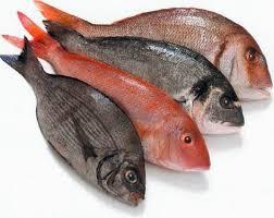 صورة تفسير حلم صيد السمك