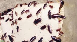 بالصور تفسير حلم الحشرات صراصير1 303x165