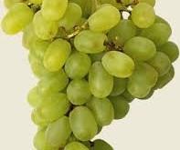 صورة تفسير حلم اكل العنب