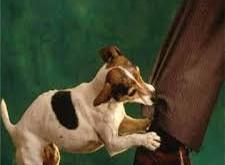 صور تفسير حلم عضة كلب