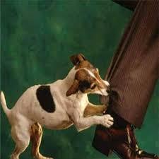 صورة تفسير حلم عضة كلب