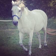 بالصور تفسير حلم الحصان download 2017