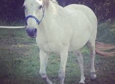 صورة تفسير حلم الحصان الابيض