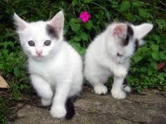 صورة تفسير حلم القطة البيضاء
