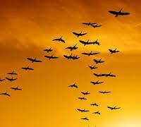 صورة تفسير حلم الطير