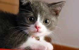 بالصور تفسير حلم القطط download 258 259x165