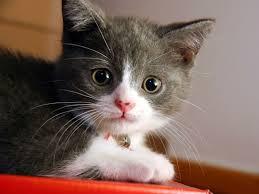 صور تفسير حلم القطط