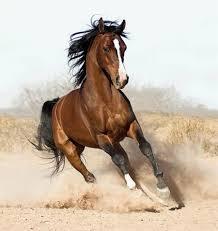 صورة تفسير حلم الحصان البني