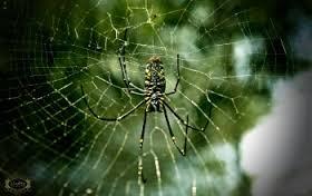 صور تفسير حلم العنكبوت