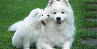 بالصور تفسير حلم الكلاب download 363