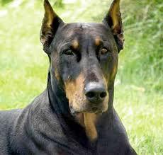صورة تفسير حلم الكلاب