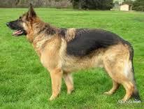 صور تفسير حلم الكلب