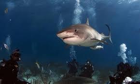 صورة تفسير حلم سمك القرش