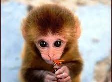 صور تفسير حلم القرد