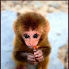 صورة تفسير حلم القرد