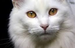 بالصور تفسير حلم القطة download 711 259x165