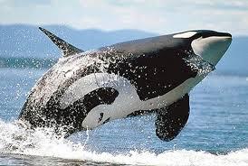 صورة تفسير حلم الحوت