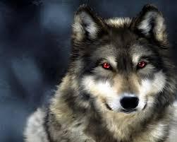 صورة تفسير حلم الذئب