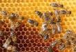 صور تفسير حلم النحل