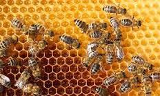 صورة تفسير حلم النحل