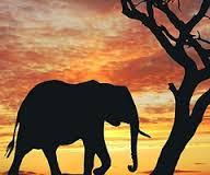 صور تفسير حلم الفيل