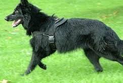 صورة تفسير حلم كلب اسود