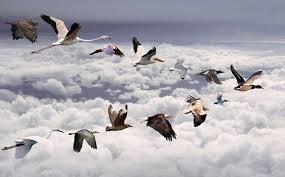 صورة تفسير حلم الطيور