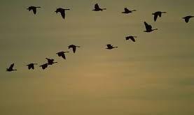 بالصور تفسير حلم الطيور images 625 277x165