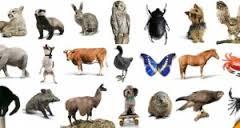 صورة تفسير حلم الحيوانات