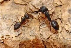 بالصور تفسير حلم النمل الاسود images33 242x165