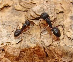 صورة تفسير حلم النمل الاسود